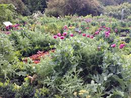 Small Picture Learn to How to Create a Potager A French Kitchen Garden