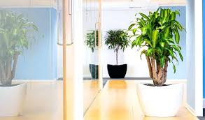 best indoor office plants. Indoor Office Plants Two In A Corridor One White  Pot And . Best