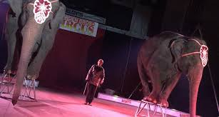 garden family circuses a troubled history
