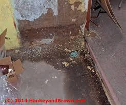 c 2016 hankeyandbrown com basement water seepage and damage photo by roger