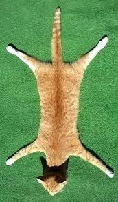 deer skin rug deer skin rug picture rugs for your home deer skin rugs for deer skin rug