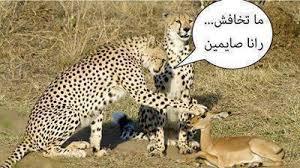 اضحك هنناااااا images?q=tbn:ANd9GcQ