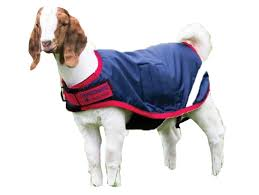 Details About Horseware Ireland Waterproof Goat Coat Navy Red Large