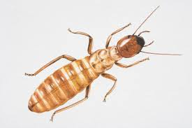 Why Do Termites Follow Ink Trails