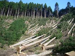 deforestation research papers deforestation