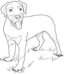 Disegno Di Rottweiler Cucciolo Da Colorare Disegni Da Colorare E