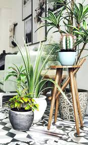 home plants decor best indoor plant ideas on green interiors and decorations