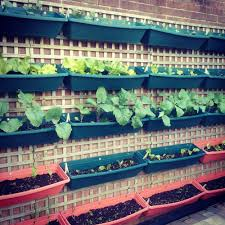 Balcony Kitchen Garden How To Plan A Vegetable Garden