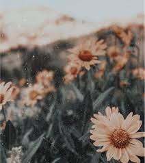 Aesthetic sunflower wallpaper ...