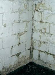how to get rid of mold on concrete walls how to remove mold from basement learn