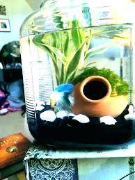 fish tank ideas s decoration at home diy betta aquarium decorating