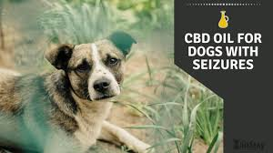 Hasil gambar untuk cbd for dogs