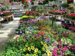 garden centers in maryland. Fine Maryland Amazing Garden Stock At Potomac CenterAmazing  Center On Centers In Maryland