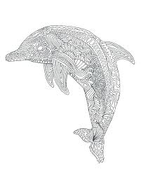 Dolphin Picture To Color Koshigayainfo