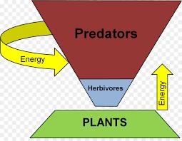 food web pyramid trophic level ecological pyramid food web ecology consumer energy