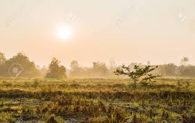 grass field sunrise. Interesting Field Stock Photo  Tree In Grass Field With Sunrise And Fog Morning Time Intended Grass Field Sunrise N