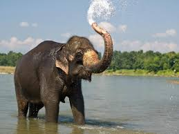 Elephants HD Images,Pictures And Free ...