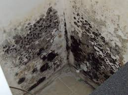remove mold in your home is key to optimum air quality and better health however it is very important to note that it is not always a do it yourself job