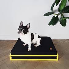 modern dog beds and feeders from hello pets  dog accessories
