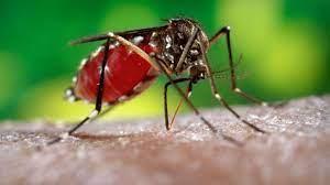 Dünyadaki Tüm Sivrisinekleri Yok Etsek Ne Olur? - YouTube