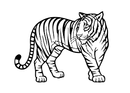 Zoo Animal Coloring Pages Tiger Printable Coloringstar Animal