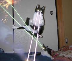 cats shooting lasers out of their eyes. Contemporary Cats Cat Cat Small To Medium Sized Cats Like Mammal Throughout Cats Shooting Lasers Out Of Their Eyes T
