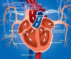 Презентация врожденные пороки сердца ⋆ Лечение Сердца Врожденные синие пороки сердца