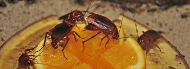 Image result for exterminators will identify the source and areas of the infestation