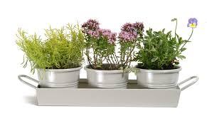 Garden Trading Pots on a Tray in Clay (Set of 3): Amazon.co.uk: Garden &  Outdoors