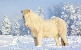 Wit Paard In De Sneeuw Horses Mules Donkeys Love Energy