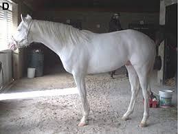 white horses. Fine Horses White Horse Inside Horses