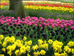 bulb garden. This Can Happen When You Choose To Layer Your Perennial Flower Bulbs. While Daffodils And Tulips Might Be The First Flowers That Come Mind Think Bulb Garden C