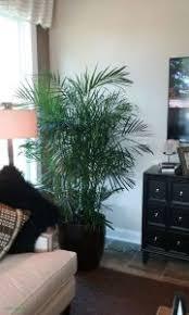 modern office plants. Modern Office Plants N