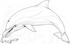 Small Picture Dolphin And Several Little Fish coloring page Free Printable