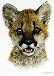 cougar cub by carl brenders