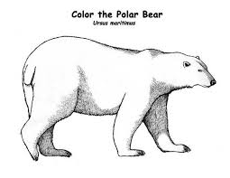 Small Picture pages polar bear