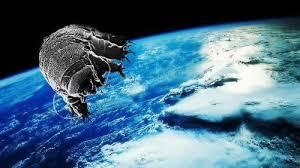 tardigrada ile ilgili görsel sonucu