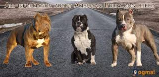 Types Of Pitbulls Chart 6 The American Bully Breed Type Bully Breed Size Chart