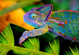 How Do Chameleons Change Their Color