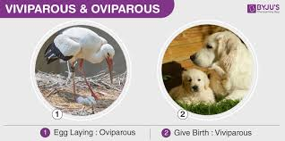 An Overview On Oviparous Ovoviviparous Viviparous Animals