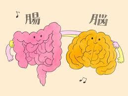 「腸活 イラスト」の画像検索結果