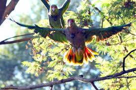 Resultado de imagem para papagaios