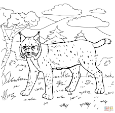 Forest Coloring Pages For Kids With Bobcat In The Forest Coloring
