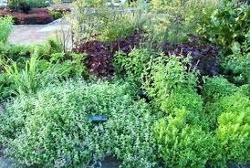 how to grow a herb garden. Herb Garden Planting Gardening How To Grow Herbs Growing An A