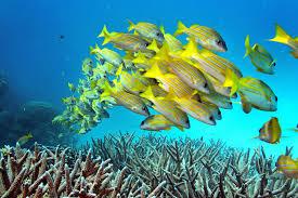no the great barrier reef in is not dead but it is in no the great barrier reef in is not dead but it is in trouble la times