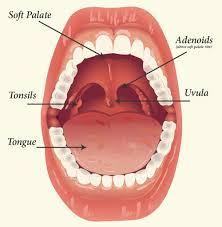 Tonsils And Adenoids Magrabi Hospitals