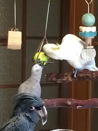 safe indestructible re loadable parrot toys photo