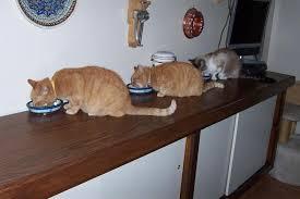 Choosing A Cat Food The Old Farmers Almanac