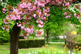flower, Garden, Blossoms Wallpapers HD ...