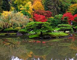 Small Picture 24 Classic Japanese Garden Plants Myonehousenet
